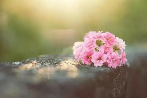心情低落无奈句子,成年人的无奈,只要无愧于心,其他的就随缘吧