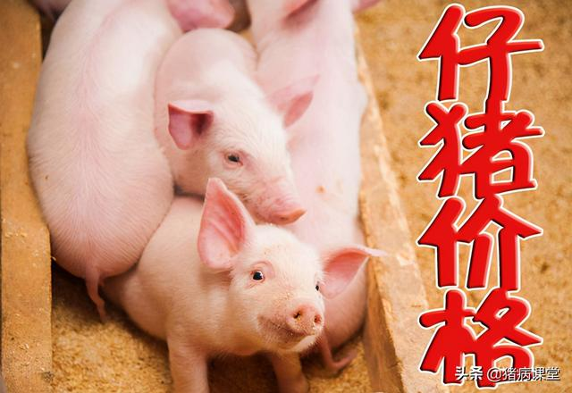 4月19日全国各地饲料添加剂苞米、豆粕报价