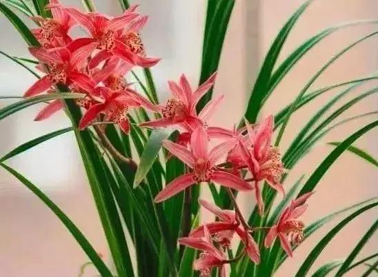 兰花图片,最全兰花鉴赏,快看看吧