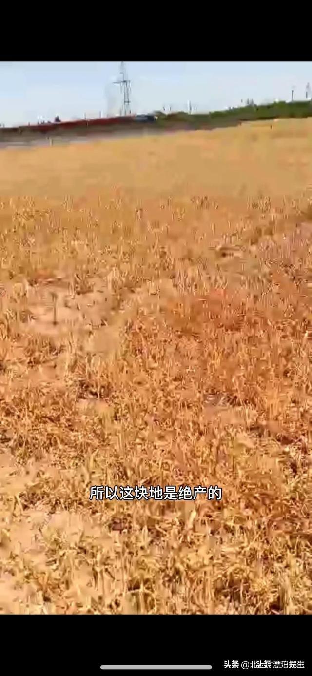 农民网曝河北一公司用40种农药种红薯导致土地绝收,事实如此吗? 全球新闻风头榜 第2张