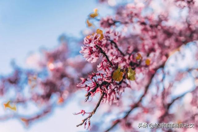 春暖花开的唯美句子,春暖花开,最美人间切莫辜负