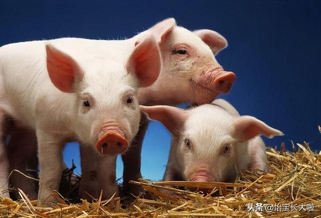 肉渣渣的做法,油腻的肥肉不要丢,教你一招做出酥脆的猪油渣,简直不要太美味