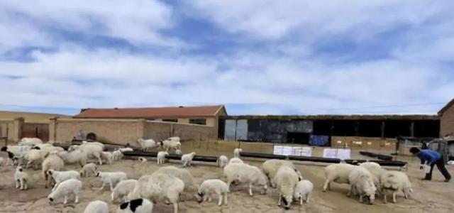 羊的成语,养羊记四条谚语,看懂养羊必赚钱!