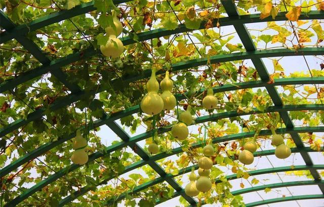 今年流行种果树,这9种花,开完就结果,家里老人都爱养
