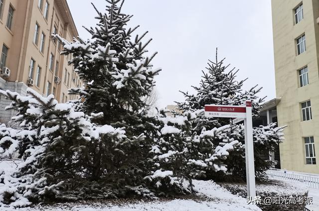 学校排名,东北地区2021大学排名:哈工大仍排第2,还没超越吉林大学