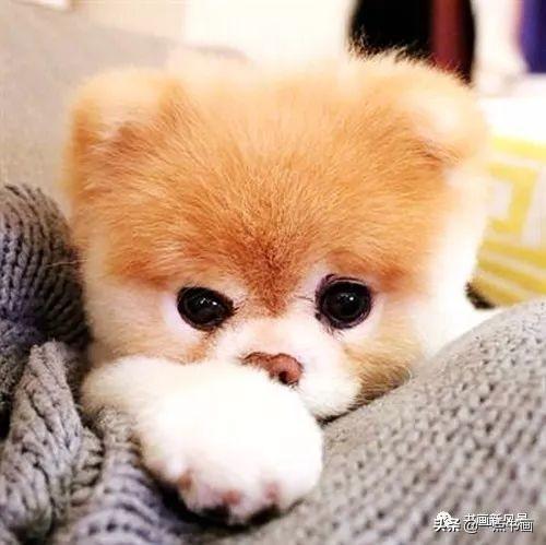 小狗图片,分享一组萌萌小狗狗,好暖心