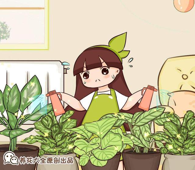 """0种常见植物浇水方法,一句话说到重点,建议收藏"""""""