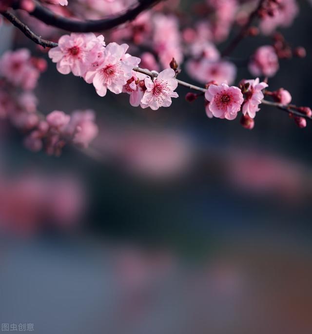欢快的诗,最轻快,临江仙:半廊花院月,一帽柳桥风