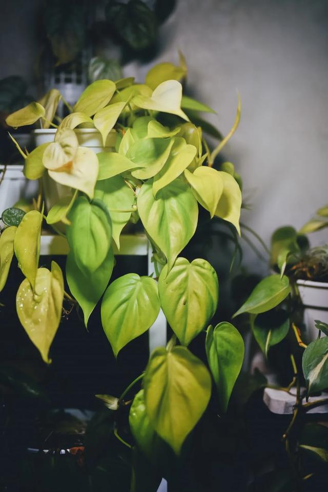 没花园怎么种花?从东北到广东,4位大神在室内种出植物园,绝美