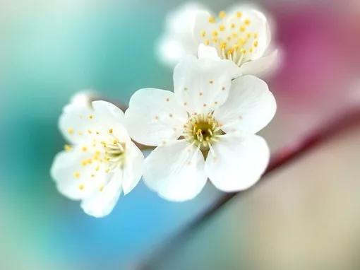 描写眼睛的句子,唯美入心坎的句子:珍惜你的眼前,别等失去再追悔回不去的曾经