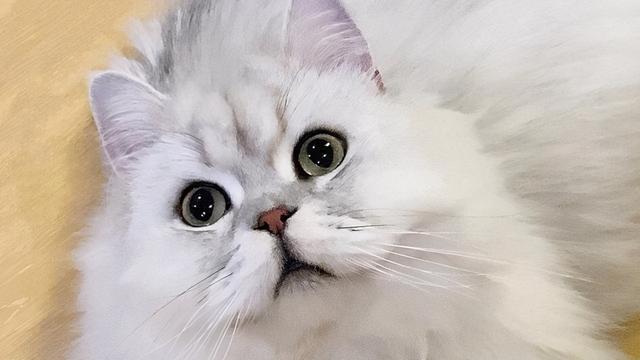 女主人浴室摔倒,貓咪在門外焦急呼喚,那擔心主人的眼神太暖了 家有萌寵 第1张