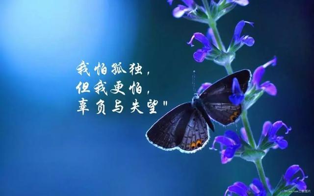 人生感悟一句话,朋友圈感悟人生哲理经典短句子,朋友圈一句话心情说说短句