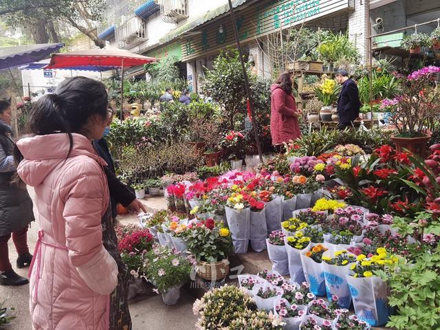 花卉批发市场,泸州春节花市不打烊!这里的10万盆鲜花不到一周售完