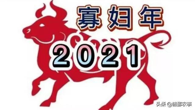 """男属狗和女属牛,明年是牛年,农村俗语""""寡年遇金牛,饿死鸡和狗"""",是什么意思?"""