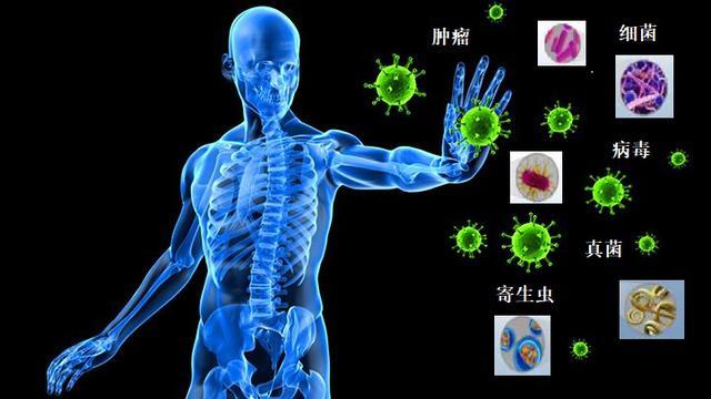 免疫系统疾病有哪些,免疫系统和常见免疫性疾病系列——免疫系统的组成与功能