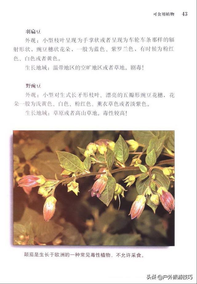 野外植物指南+有毒植物图鉴《各国精锐特种部队野外生存手册》3