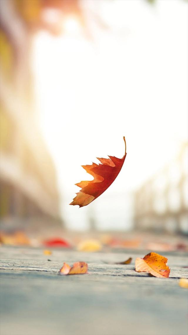 秋的散文诗,散文:人间秋暖,不负时光