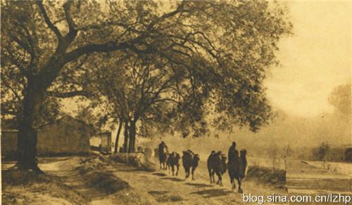 骆驼的寓意,《新世界》:说说老北京的骆驼,它的出现有何隐秘?
