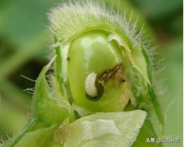 农药品种,10种农药的经典配方能防治100多种病虫害,农民朋友收藏备用