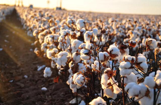 全世界第二大服装零售商H&M集团公司申明:遏制新疆棉花和纺加