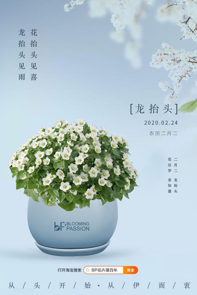公司花卉,龙抬头见雨,花抬头见喜 办公室养这几款花,旺事业扩人脉还招财