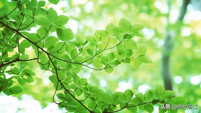 描写春雨的句子,一抹如烟绿,点燃整个春