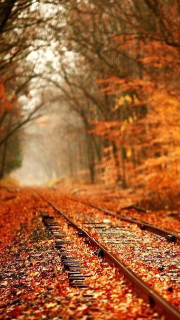 关于秋天的现代诗,现代诗:那个秋天