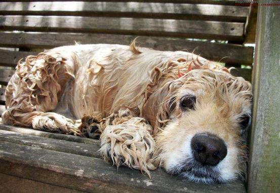 狗    婴儿,意外发现的流浪狗宝宝,干净又可爱,见过的人都抢着领养
