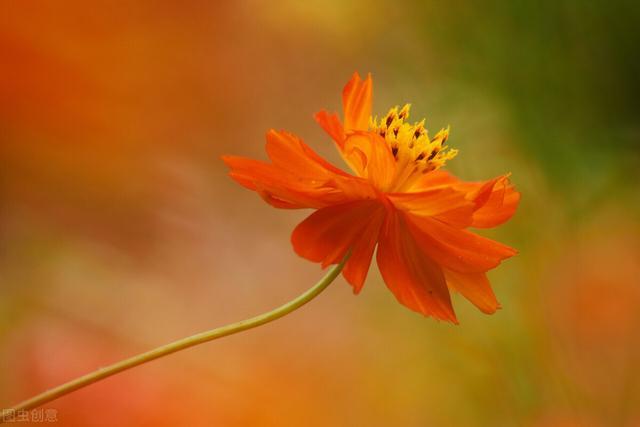 春华秋实,9种花草的种子进入采集期,记得及时采