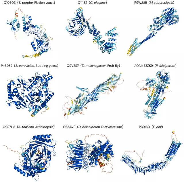 AlphaFold2爆火背后,人类为什么要死磕蛋白质?