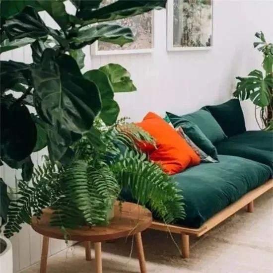 客厅绿植2
