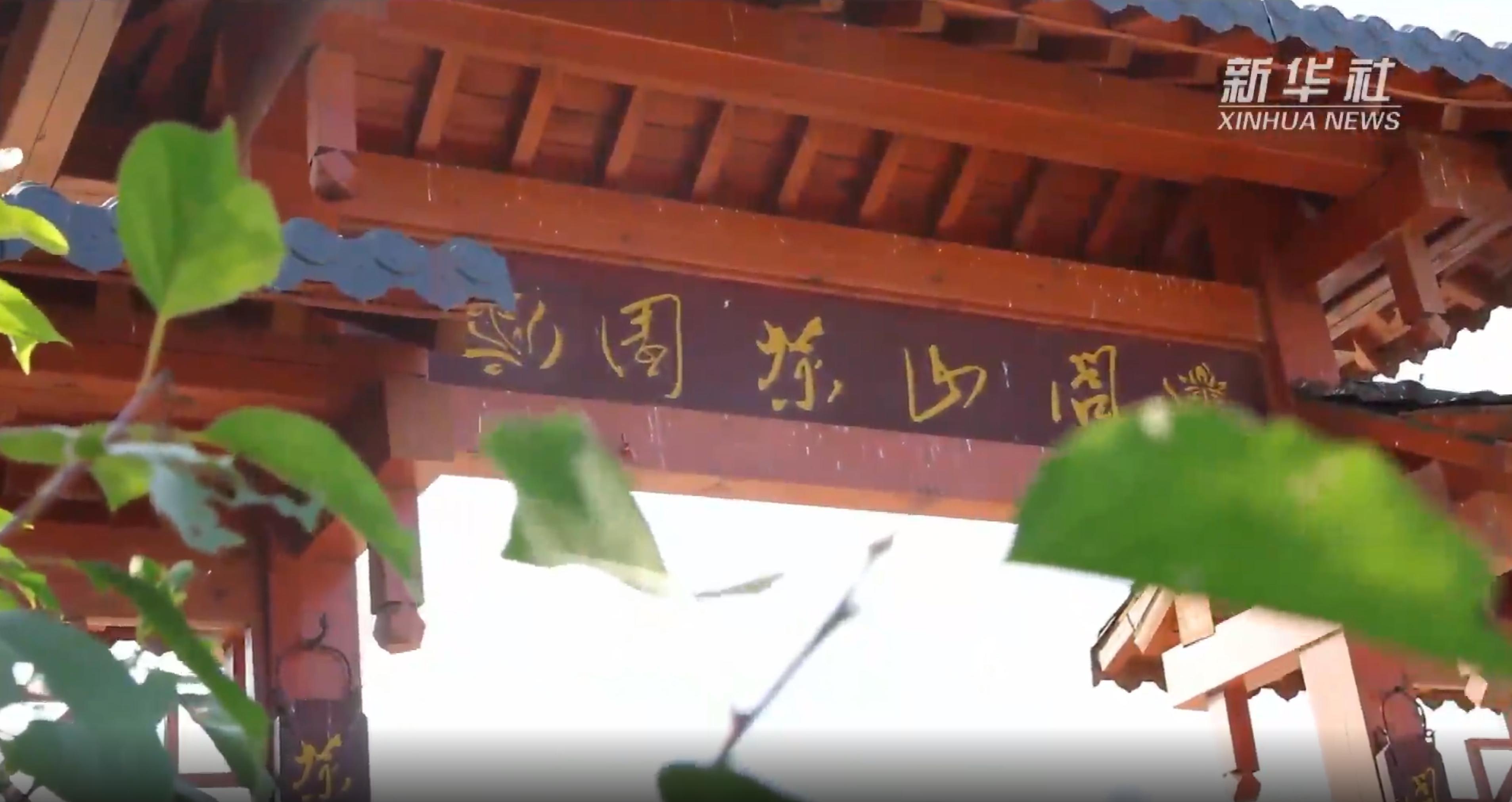 """茶树如何""""闯关东""""?带你了解中国最北的茶园-小喜年"""