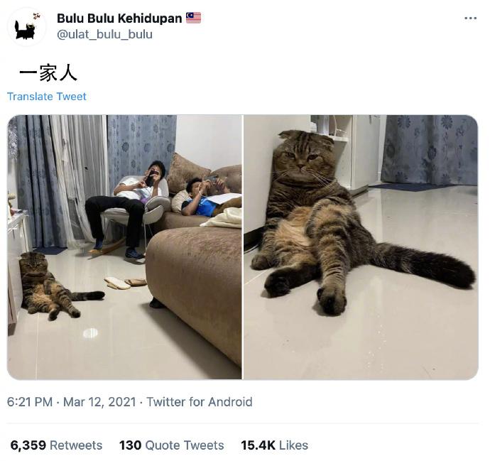 一家人和猫咪北京瘫  不是一家人不进一家门