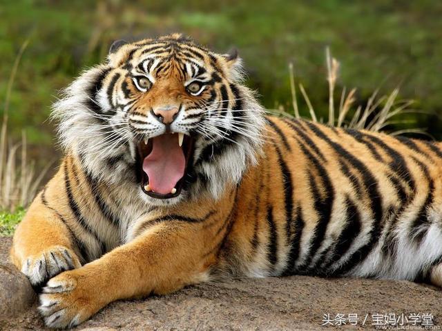 关于50年生肖虎运程的信息-第1张图片-天下生肖网