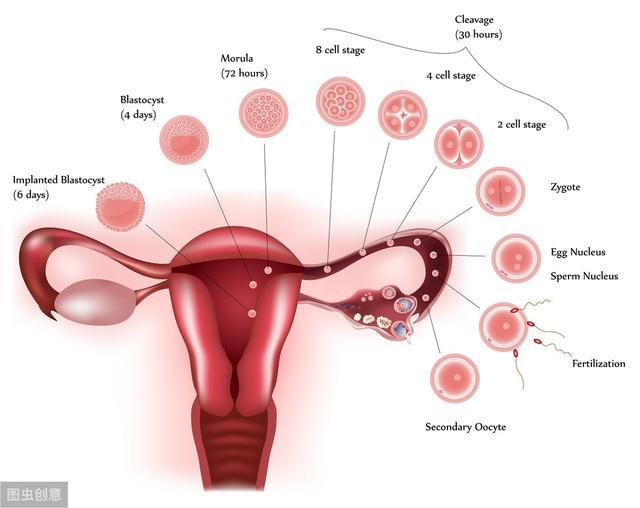 妇产科医生的助孕策略:促排卵