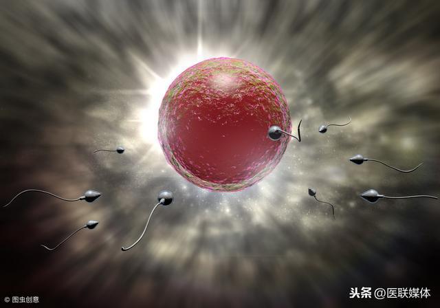 """受精卵像一颗种子,若遇到3个""""阻碍"""",就易发生胚胎停"""