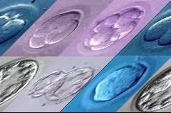 胚胎 说说胚胎那些事