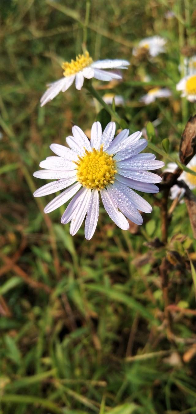 只要心中入时   在路边的野花也是迷人
