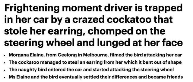 澳洲女子被这个强盗困在车里大气不敢出!路人看了都不敢救,太可怕了