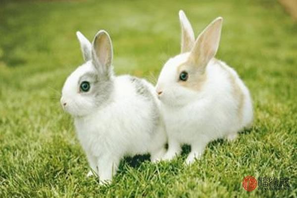 包含87兔配什么生肖最好的词条-第2张图片-天下生肖网