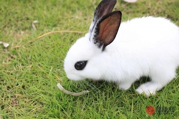 包含87兔配什么生肖最好的词条-第3张图片-天下生肖网