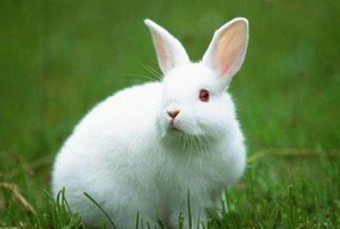 适合做夫妻的男女属相(兔和龙的属相适合做夫妻吗)-第1张图片-天下生肖网