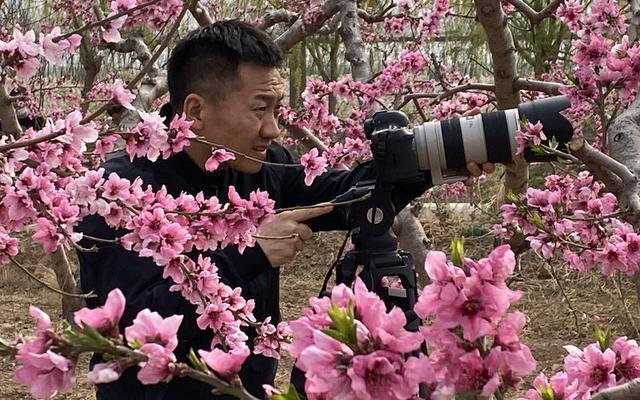 陕西大荔线上赏桃花 网络直播秀春色