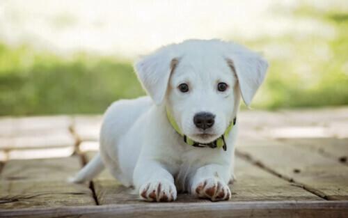 """犬虫一扫光:宠物""""鼻纹身份证""""来"""