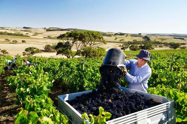 澳洲红酒暴跌86.61%,国产酒商反击拿下市场,创始人曾是放牛娃