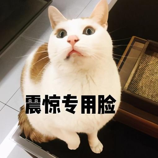 电竞少女官网搭配(电竞少女jk冬季搭配)