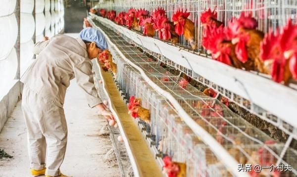 """乡下养殖出""""新禁令"""",5种走为整齐约束禁锢,有养殖户又要难了"""