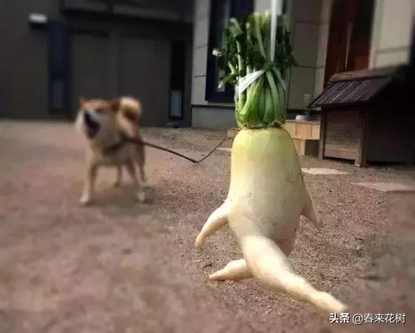 搞笑蔬菜漫画大全图片大全:开心一下,那些上辈子投错胎的蔬菜,太搞笑了