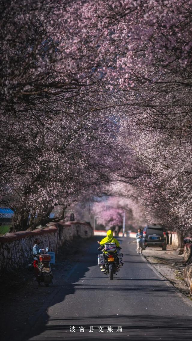 中国最大桃花谷迎最美花期!还有现场直播等着你!