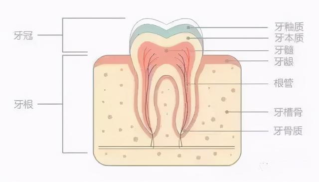 牙齿为什么越来越黄?常见的三种美白方式相识一下1031 作者:admin 帖子ID:23448